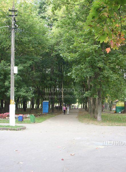 Фото аллея парка культуры и отдыха г. Щелково (ул.Пушкина) - Щелково.ru